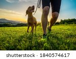Silhouettes Of Runner And Dog...