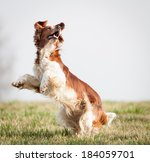 Stock photo dog 184059701