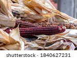 Colorful Ears Of Corn For Fall...