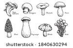 various mushrooms set. hand... | Shutterstock .eps vector #1840630294