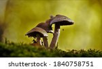 Photo Of A Forest Mushroom Wit...