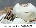 Corn Snake In The Egg.