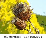 Seed Head Of A Giant Cardoon...