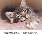 Stock photo small kitten lying on sofa 184132091