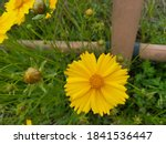 Yellow And Red Rustic Flowers...