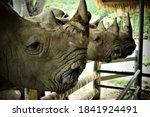 Rhinoceros In The Zoo  Taken In ...