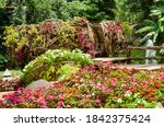 colorful of blooming flowers...   Shutterstock . vector #1842375424