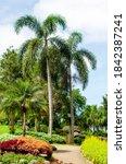 beautiful design of blooming...   Shutterstock . vector #1842387241