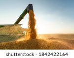 Grain Auger Of Combine Pouring...