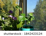 small garden on the balcony.... | Shutterstock . vector #1842423124
