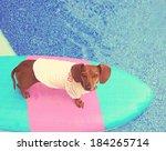 A Cute Dachshund On A Board In...