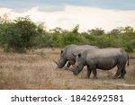 2 White Rhino Seen On A Safari...