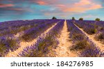 Lavender Meadows In Provence....