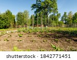 Vegetable Garden Under A Blue...
