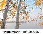 Beautiful Autumnal Scene....