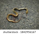 Photo Of A Dead Snake On The...