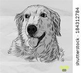 Hand Drawn Dog Golden Retrieve...