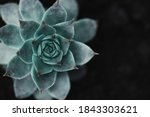 Succulent Background. High...