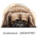 Pekingese Dog. Wall Sticker....