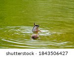 Small Ducks Playing In The Lak...