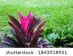 Vibrant Tropical Plant Outdoor...