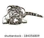 Sleeping White Tiger Drawing