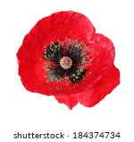 Beautiful Poppy Flower On A...