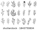 collection forest fern... | Shutterstock .eps vector #1843750834