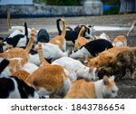 The Abandoned Cats On The...