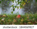 Closeup Of Red Fly Agaric...