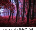 Dark Mysterious Forest In Pink...