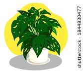 tree pot   monstera adansonii.... | Shutterstock .eps vector #1844830477