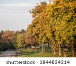 Plane Trees With Fall Colors...