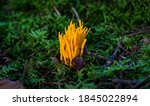 Mushroom In The Autumn Forest