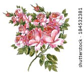 wild and garden roses on a...   Shutterstock . vector #184532381
