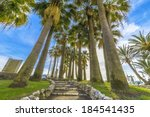 path under the palms in cannes  ... | Shutterstock . vector #184541435