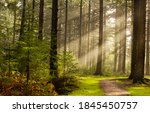 Forest Trees Sunbeams Path In...