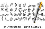 spices doodle set. collection... | Shutterstock .eps vector #1845523591
