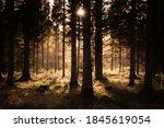 Sunlit Woodland  Timble Ings...