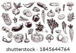vegetables sketch. hand drawn... | Shutterstock .eps vector #1845644764