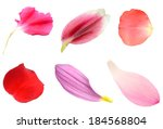 Petal Flowers Isolated White