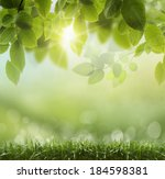 spring or summer season... | Shutterstock . vector #184598381