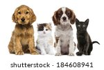 Stock photo group of kittens and dogs 184608941