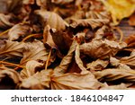 There Are Fallen Leaves On The...