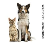 Stock photo cat and dog sitting together and facing at the camera 184610525