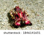 Amazing Sea Critters  Most...