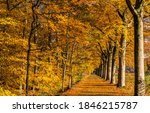 Small photo of Autumn forest park alley view. Golden autumn park alley. Autumn park alley. Autumn alley in forest park