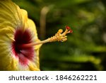Photo Of A Flower With Yellow...