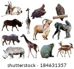 set of african animals.... | Shutterstock . vector #184631357