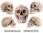 Small photo of Skull model on isolated white background